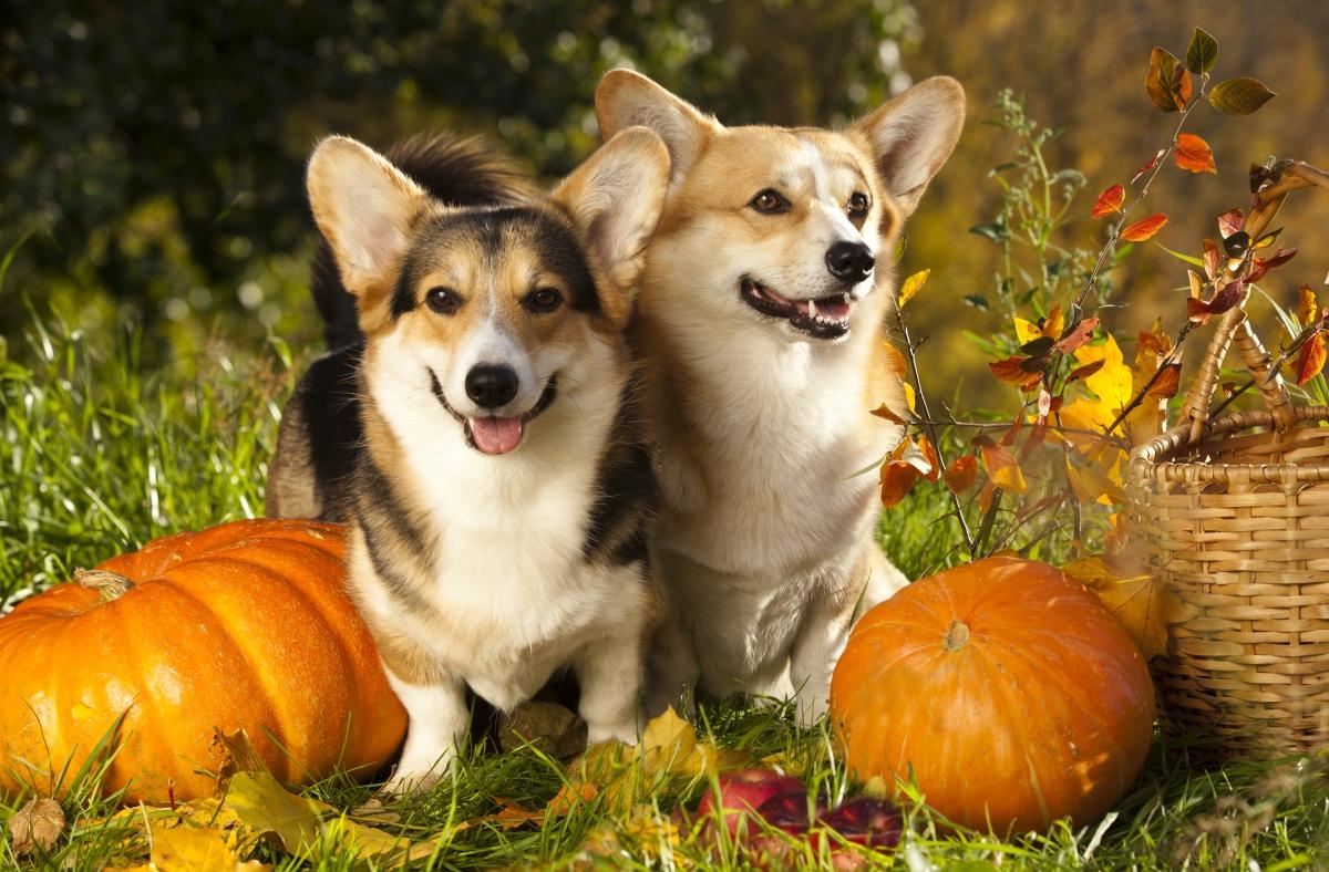 10 Dog Friendly Recipes To Make ThisFall