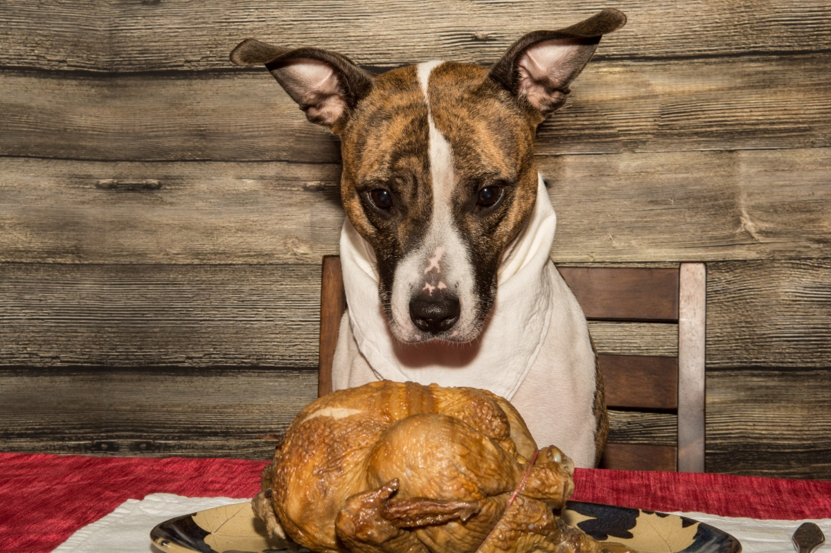 How to Have a Dog-Friendly Thanksgiving