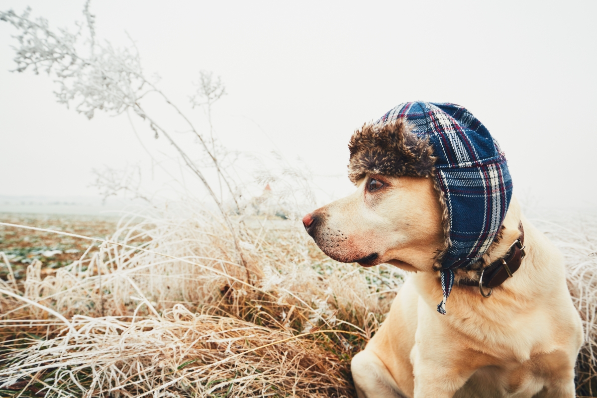 10 Ways to Protect Your Dog In Colder Weather