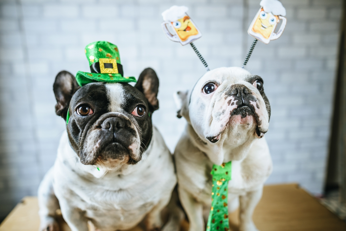 5 St. Patrick's Day Accessories Your Dog Needs
