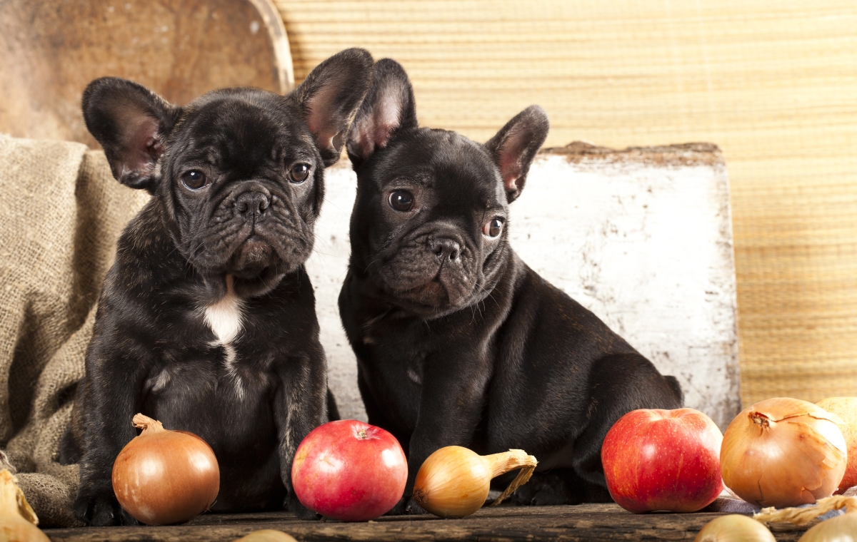 15 Surprising Foods to Never Feed Your Dog